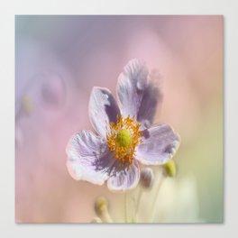 Beautiful Pastel Anemone Canvas Print
