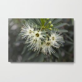 Little Penda Flower Metal Print