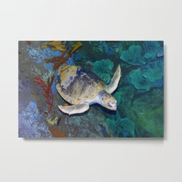 Kemp's Ridley Sea Turtle Metal Print