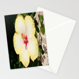 Pale Yellow Hibiscus Flower - Front View  Stationery Cards
