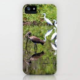 Egrets And Ibis iPhone Case