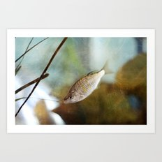 Here Fishy, Fishy Art Print
