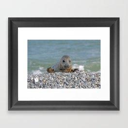 Gray seal - Kegelrobbe Framed Art Print