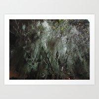 moss Art Prints featuring Moss by Saundra Myles
