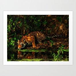 The Royal Bengal Tiger ( Art Print