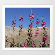 Himalayan Blossoms Art Print