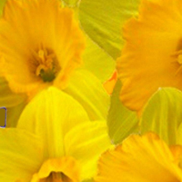 Olive Colored Golden Daffodile Floral Abundance Leggings