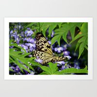 Butterfly in nature Art Print