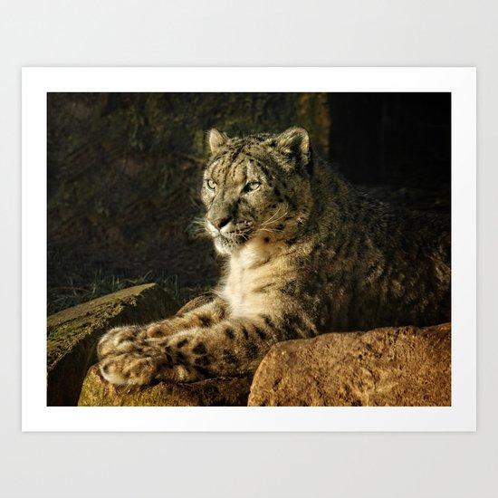 Endangered Snow Leopard Art Print