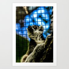 Lemur, bright-eyed and bushy-tailed  Art Print