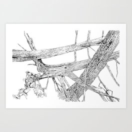 tangled cedars Art Print