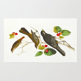 Little Tawny Thrush, Ptiliogony's Townsendi, Canada Jay Rug