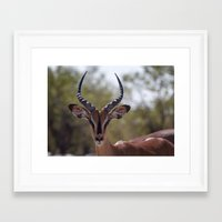 tame impala Framed Art Prints featuring Impala by Katie Jo Sheppard