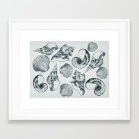 shells Framed Art Prints featuring shells by sustici