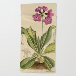 Primula sinopurpurea 1918 Beach Towel