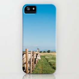 Horny cow behind wooden fence  iPhone Case