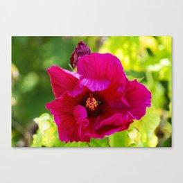 Jazzberry Jam Hibiscus Canvas Print