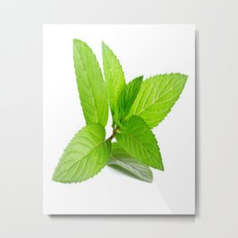 mint tea picture beautiful Metal Print