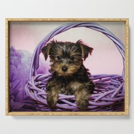 Yorkshire Terrier Puppy Sitting in a Purple Basket with Purple Floral Decorations and a Pink Backgro Serving Tray