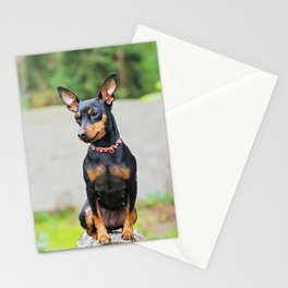 Outdoor portrait of a miniature pinscher dog Stationery Cards
