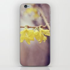 Spring Flowers and Raindrops iPhone & iPod Skin