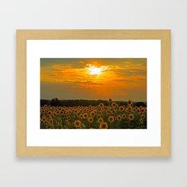 Field of Sunflowers at Sunset Framed Art Print