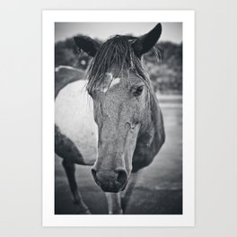 wild horse, assateague Art Print