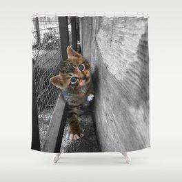 Beautiful Stray Tabby Kitten Shower Curtain