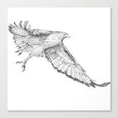 Red Tail Hawk in Flight Canvas Print