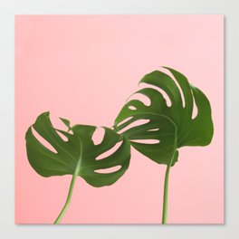 Monstera madness Canvas Print