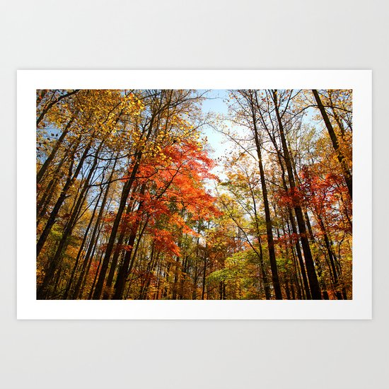 Autumn Trees Tops Art Print