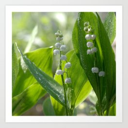 #Lily of The #Valley with #waterdrops on the #leaves Art Print