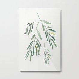 Eucalyptus Branches II Metal Print