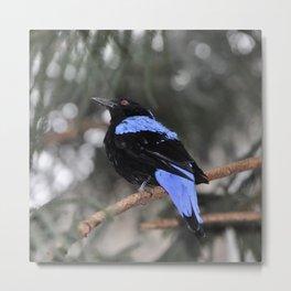 Blue and Black Bird Metal Print