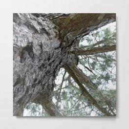 Up a Pine Tree Metal Print