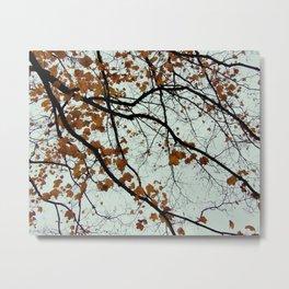 meticulous maple veins Metal Print
