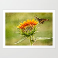 Yang Sunflower Art Print