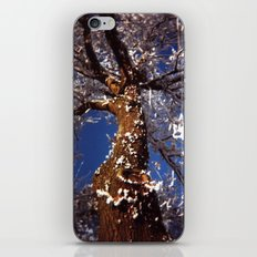 Frosty iPhone & iPod Skin