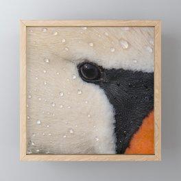 Mute Swan in Winter - CloseUp Framed Mini Art Print