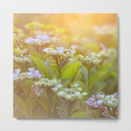 Sunset Hydrangea Metal Print