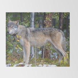 Wolf encounter in Jasper National Park Throw Blanket