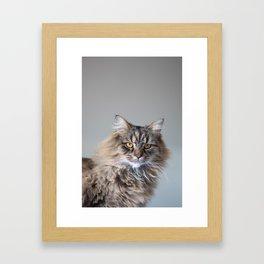 Royal Tom cat : Look into my eyes Framed Art Print