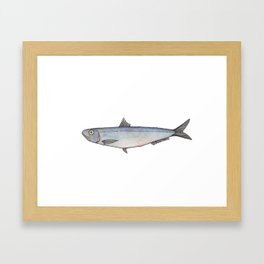 Sardine: Fish of Portgual Framed Art Print