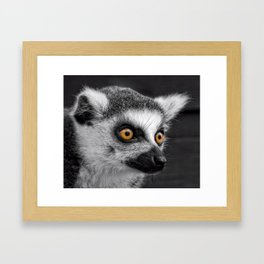Ring-Tailed Lemur Framed Art Print