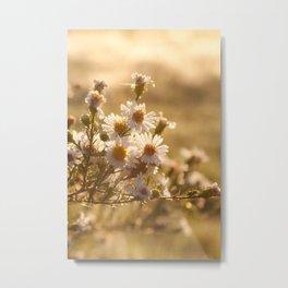 White Aster Flower Metal Print
