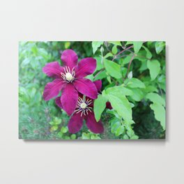 Passion Flowers Up Close Metal Print