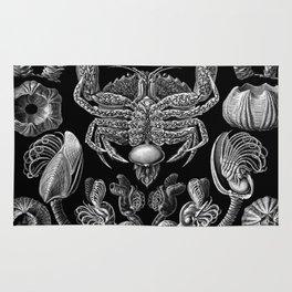 Ernst Haeckel Cirripedia Barnacles Crabs Rug