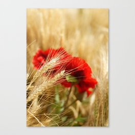 Field of golden wheat with red poppy flowers Canvas Print