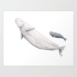 Beluga and baby beluga whale Art Print