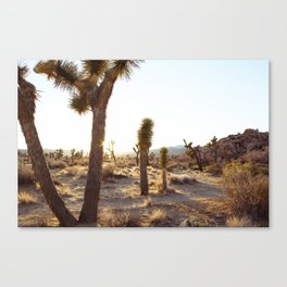 Joshua Tree, CA  / Dec 2013 Canvas Print